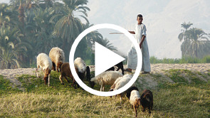 """The Lord is my Shepherd"""" brought to life with David's Own Storie"""