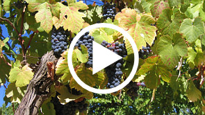 The Flow of God's Energy—Jesus Explains how to be Connected to the Vine